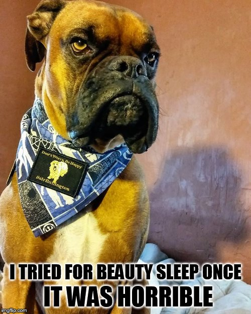 Grumpy Dog | IT WAS HORRIBLE I TRIED FOR BEAUTY SLEEP ONCE | image tagged in grumpy dog | made w/ Imgflip meme maker