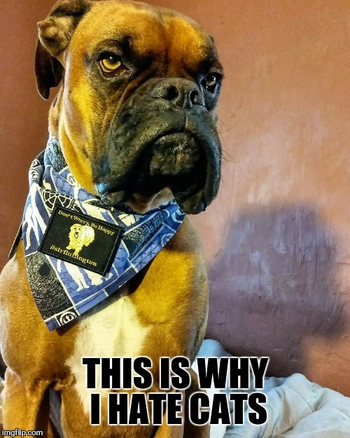 Grumpy Dog | THIS IS WHY I HATE CATS | image tagged in grumpy dog | made w/ Imgflip meme maker
