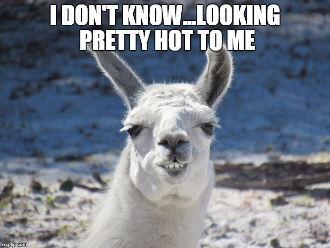 Derp | I DON'T KNOW...LOOKING PRETTY HOT TO ME | image tagged in derp | made w/ Imgflip meme maker