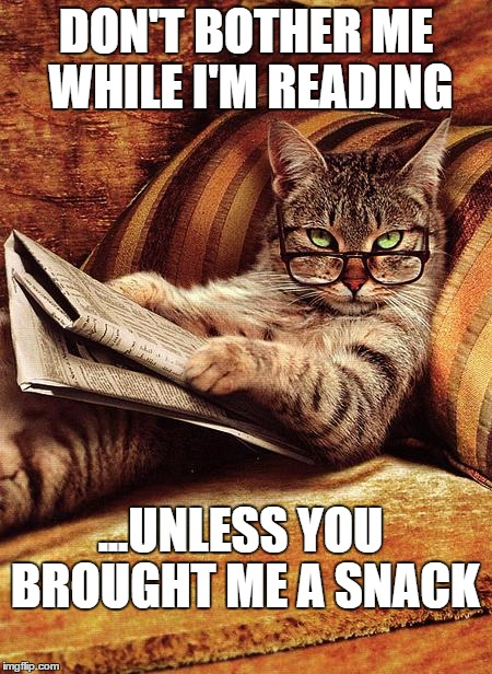 cat reading | DON'T BOTHER ME WHILE I'M READING ...UNLESS YOU BROUGHT ME A SNACK | image tagged in cat reading | made w/ Imgflip meme maker