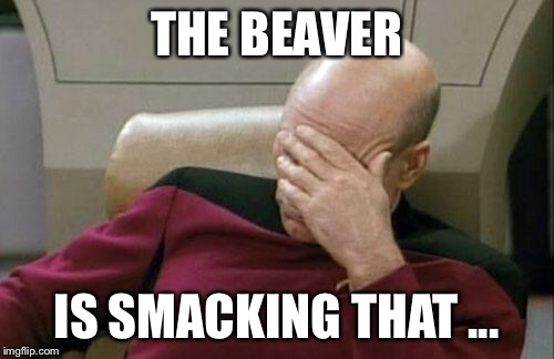 Captain Picard Facepalm Meme | THE BEAVER IS SMACKING THAT ... | image tagged in memes,captain picard facepalm | made w/ Imgflip meme maker
