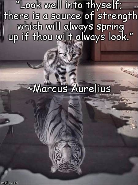 "Catiger | ""Look well into thyself; there is a source of strength which will always spring up if thou wilt always look."" ~Marcus Aurelius 