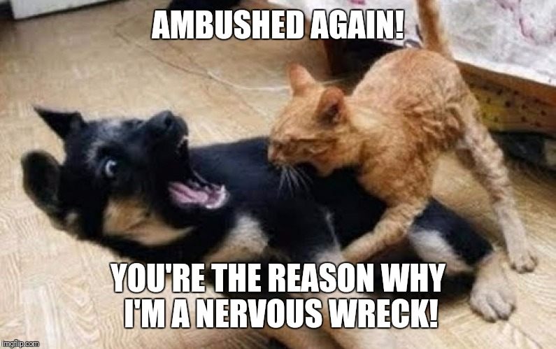 AMBUSHED AGAIN! YOU'RE THE REASON WHY I'M A NERVOUS WRECK! | made w/ Imgflip meme maker