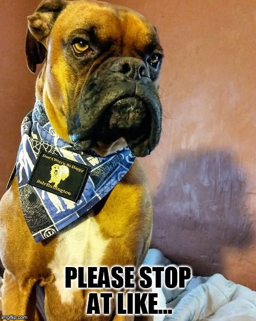 Grumpy Dog | PLEASE STOP AT LIKE... | image tagged in grumpy dog | made w/ Imgflip meme maker