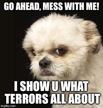 GO AHEAD, MESS WITH ME! I SHOW U WHAT TERRORS ALL ABOUT | made w/ Imgflip meme maker