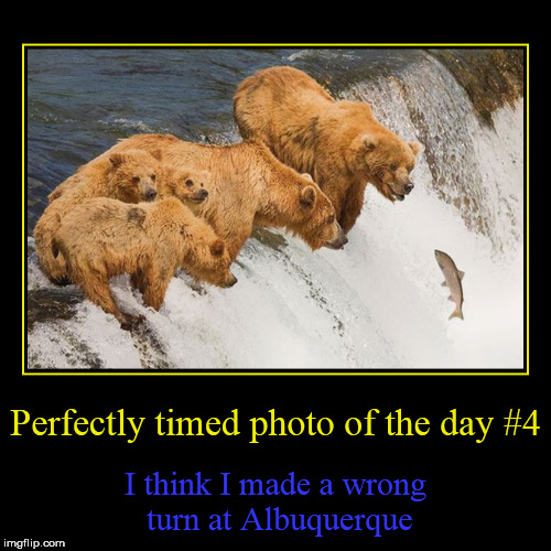 Perfectly timed photo #4 | Perfectly timed photo of the day #4 | I think I made a wrong turn at Albuquerque | image tagged in funny,demotivationals,perfectly timed photo | made w/ Imgflip demotivational maker