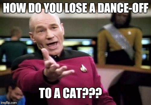 Picard Wtf Meme | HOW DO YOU LOSE A DANCE-OFF TO A CAT??? | image tagged in memes,picard wtf | made w/ Imgflip meme maker