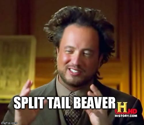 Ancient Aliens Meme | SPLIT TAIL BEAVER | image tagged in memes,ancient aliens | made w/ Imgflip meme maker
