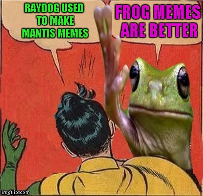 Thank you to DashHopes for making this template!!! | RAYDOG USED TO MAKE MANTIS MEMES FROG MEMES ARE BETTER | image tagged in mantis,memes,frogs,frog slapping robin,funny,animals | made w/ Imgflip meme maker