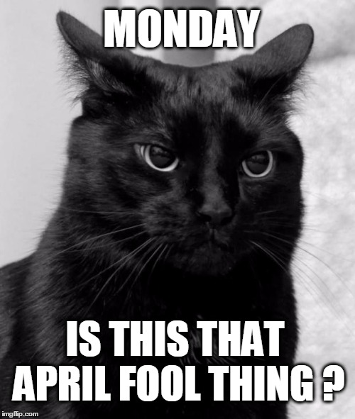 Image result for april fools day cat images
