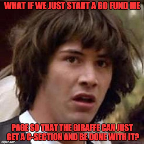 Conspiracy Keanu Meme | WHAT IF WE JUST START A GO FUND ME PAGE SO THAT THE GIRAFFE CAN JUST GET A C-SECTION AND BE DONE WITH IT? | image tagged in memes,conspiracy keanu | made w/ Imgflip meme maker