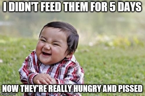 Evil Toddler Meme | I DIDN'T FEED THEM FOR 5 DAYS NOW THEY'RE REALLY HUNGRY AND PISSED | image tagged in memes,evil toddler | made w/ Imgflip meme maker