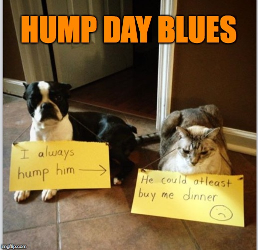 Hump Day | HUMP DAY BLUES | image tagged in blues | made w/ Imgflip meme maker