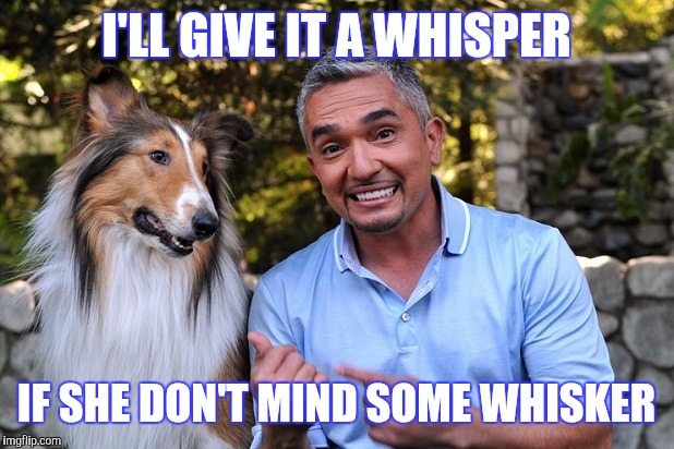I'LL GIVE IT A WHISPER IF SHE DON'T MIND SOME WHISKER | made w/ Imgflip meme maker