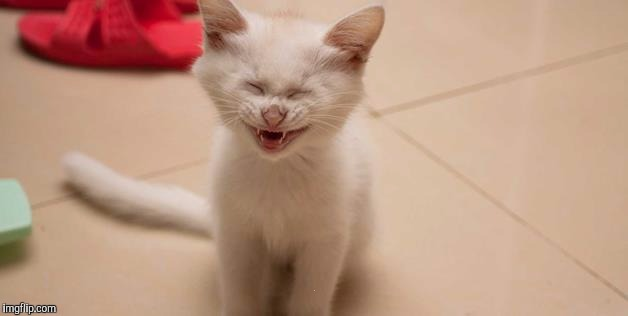 Cat Laughing | . | image tagged in cat laughing | made w/ Imgflip meme maker
