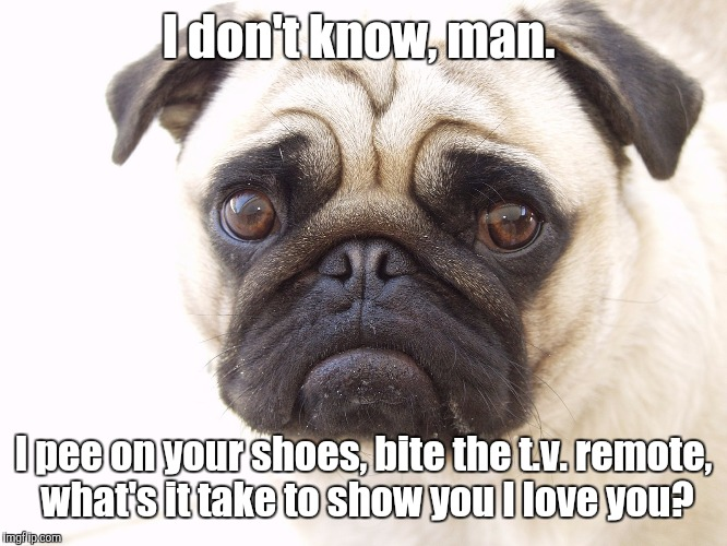 I don't know, man. I pee on your shoes, bite the t.v. remote, what's it take to show you I love you? | made w/ Imgflip meme maker