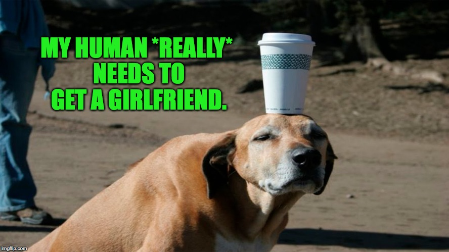Frustrated Doggo | MY HUMAN *REALLY* NEEDS TO GET A GIRLFRIEND. | image tagged in human needs a gf | made w/ Imgflip meme maker