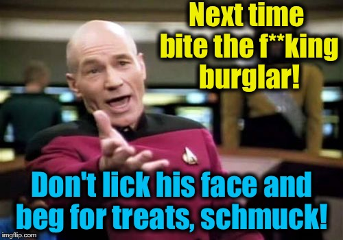 Picard Wtf Meme | Next time bite the f**king burglar! Don't lick his face and beg for treats, schmuck! | image tagged in memes,picard wtf | made w/ Imgflip meme maker