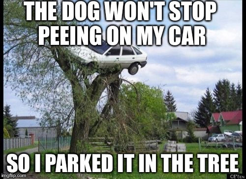 Secure Parking Meme | THE DOG WON'T STOP PEEING ON MY CAR SO I PARKED IT IN THE TREE | image tagged in memes,secure parking | made w/ Imgflip meme maker