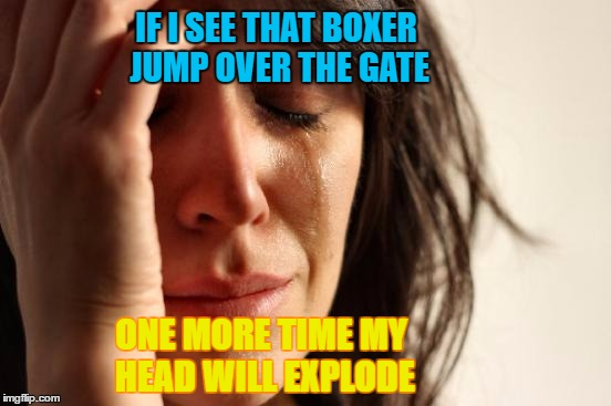 GIF Overload | IF I SEE THAT BOXER JUMP OVER THE GATE ONE MORE TIME MY HEAD WILL EXPLODE | image tagged in memes,first world problems,gifs,boxer dog | made w/ Imgflip meme maker