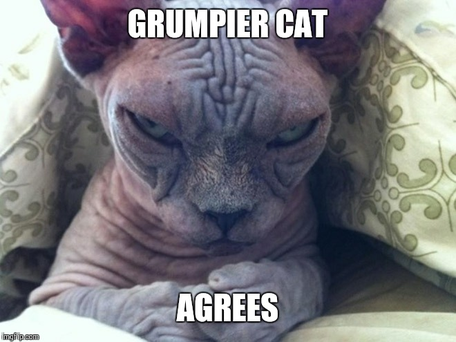 GRUMPIER CAT AGREES | made w/ Imgflip meme maker