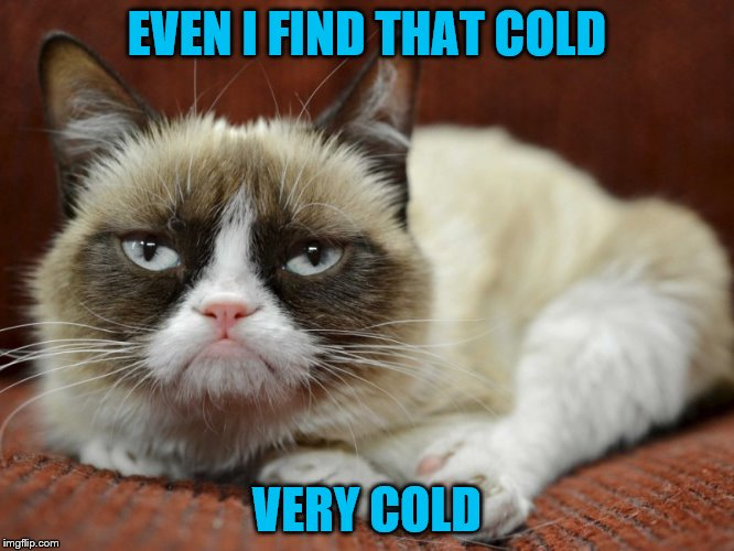 Sad Cat | EVEN I FIND THAT COLD VERY COLD | image tagged in sad cat | made w/ Imgflip meme maker
