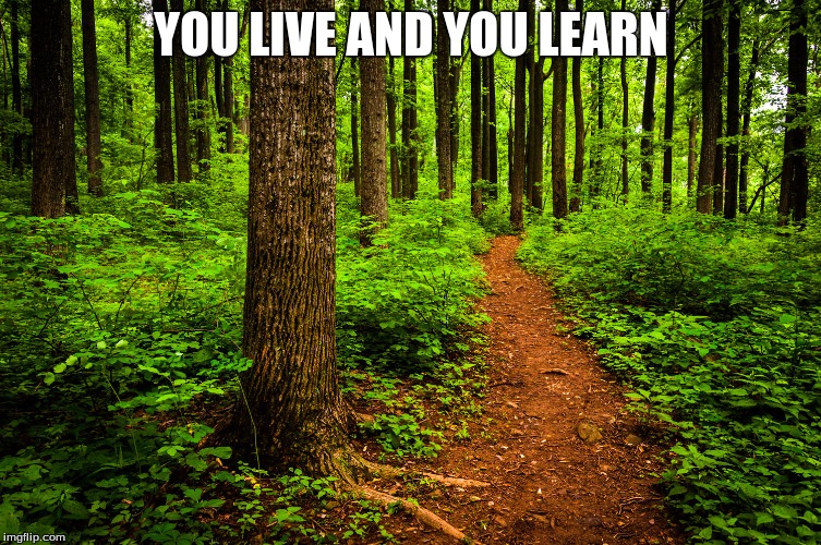 forest path | YOU LIVE AND YOU LEARN | image tagged in forest path | made w/ Imgflip meme maker