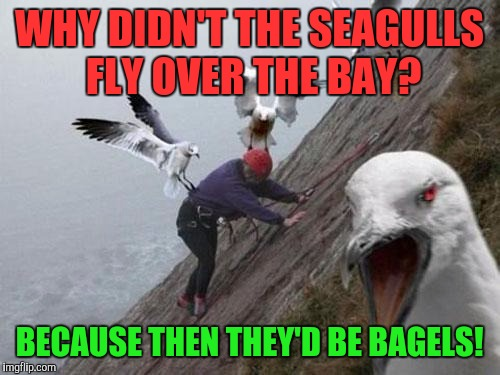 You get it Mr. rock climber?? | WHY DIDN'T THE SEAGULLS FLY OVER THE BAY? BECAUSE THEN THEY'D BE BAGELS! | image tagged in angry birds,memes,funny,corny joke,seagulls | made w/ Imgflip meme maker