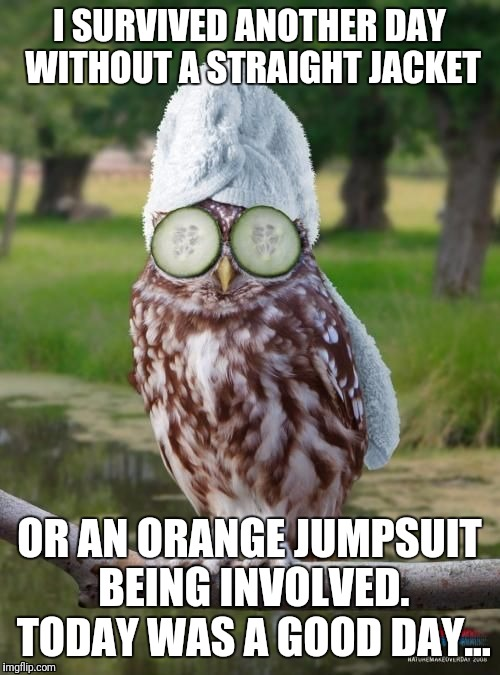 Today was a good day | I SURVIVED ANOTHER DAY WITHOUT A STRAIGHT JACKET OR AN ORANGE JUMPSUIT BEING INVOLVED. TODAY WAS A GOOD DAY... | image tagged in relax owl,crazy,straight jacket,insane,today was a good day,prison | made w/ Imgflip meme maker