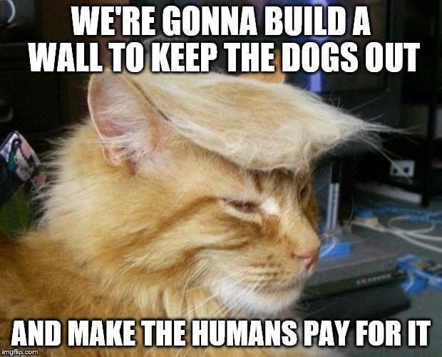 trumpcat | WE'RE GONNA BUILD A WALL TO KEEP THE DOGS OUT AND MAKE THE HUMANS PAY FOR IT | image tagged in donald trump,cat,wall,trump | made w/ Imgflip meme maker