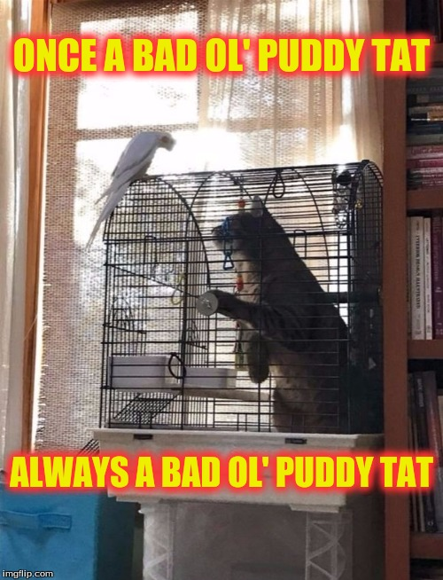 Hey Granny | ONCE A BAD OL' PUDDY TAT ALWAYS A BAD OL' PUDDY TAT | image tagged in memes,looney tunes,tweety and sylvester,custom template | made w/ Imgflip meme maker