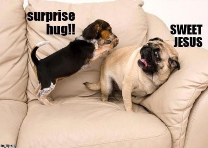 Attack hug! | J | image tagged in dogs,hugs | made w/ Imgflip meme maker