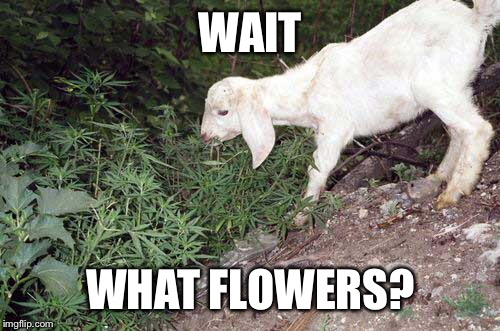 WAIT WHAT FLOWERS? | made w/ Imgflip meme maker