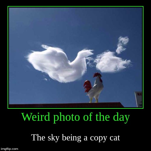 Poor fake chicken XD | Weird photo of the day | The sky being a copy cat | image tagged in funny,demotivationals,copy cats,weird photo of the day,juicydeath1025 | made w/ Imgflip demotivational maker