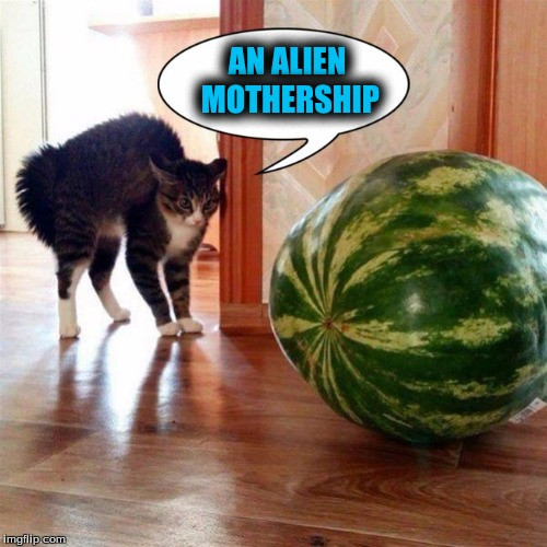 The Mind of a Cat | AN ALIEN MOTHERSHIP | image tagged in memes,funny cats,custom template | made w/ Imgflip meme maker