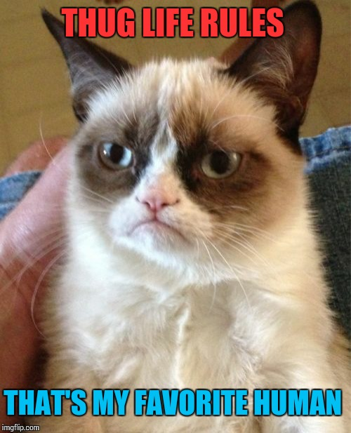 Grumpy Cat Meme | THUG LIFE RULES THAT'S MY FAVORITE HUMAN | image tagged in memes,grumpy cat | made w/ Imgflip meme maker