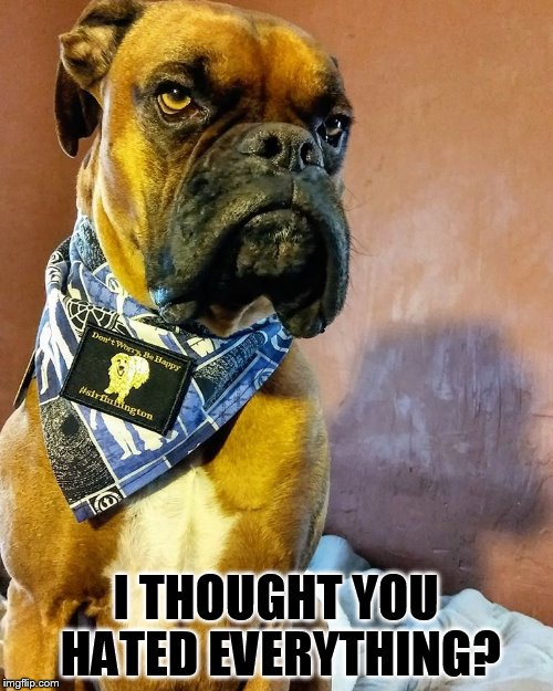 Grumpy Dog | I THOUGHT YOU HATED EVERYTHING? | image tagged in grumpy dog | made w/ Imgflip meme maker