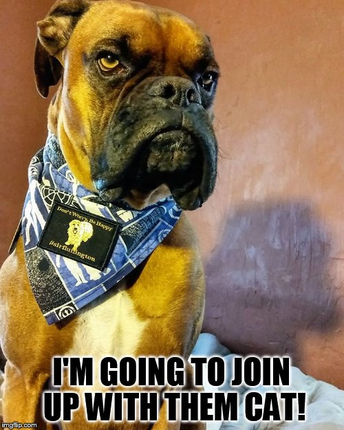Grumpy Dog | I'M GOING TO JOIN UP WITH THEM CAT! | image tagged in grumpy dog | made w/ Imgflip meme maker