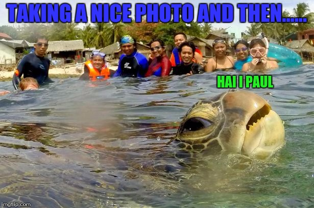 Turtle photo bomb | TAKING A NICE PHOTO AND THEN...... HAI I PAUL | image tagged in turtle,photo bomb,cute,funny | made w/ Imgflip meme maker