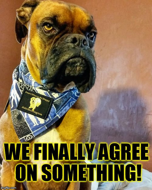 Grumpy Dog | WE FINALLY AGREE ON SOMETHING! | image tagged in grumpy dog | made w/ Imgflip meme maker