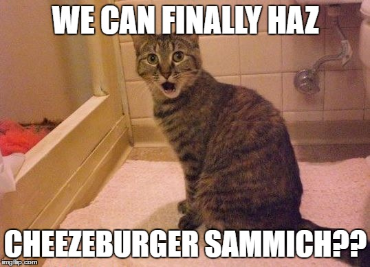 surprised and amazed cat | WE CAN FINALLY HAZ CHEEZEBURGER SAMMICH?? | image tagged in surprised and amazed cat | made w/ Imgflip meme maker