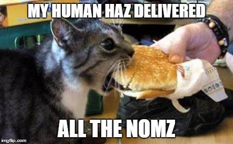 cat noms | MY HUMAN HAZ DELIVERED ALL THE NOMZ | image tagged in cat noms | made w/ Imgflip meme maker