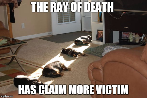 The Ray Of Death | THE RAY OF DEATH HAS CLAIM MORE VICTIM | image tagged in meme,ray of death,dog,death,funny | made w/ Imgflip meme maker