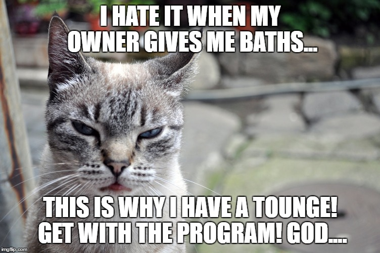 I HATE IT WHEN MY OWNER GIVES ME BATHS... THIS IS WHY I HAVE A TOUNGE! GET WITH THE PROGRAM! GOD.... | image tagged in fucking idiots | made w/ Imgflip meme maker