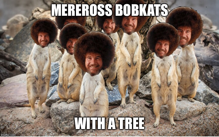 I fear for my sanity  | MEREROSS BOBKATS WITH A TREE | image tagged in bob ross week,memes | made w/ Imgflip meme maker