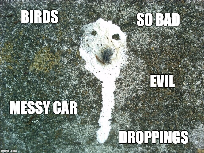 BIRDS DROPPINGS SO BAD MESSY CAR EVIL | made w/ Imgflip meme maker