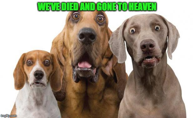 WE'VE DIED AND GONE TO HEAVEN | made w/ Imgflip meme maker