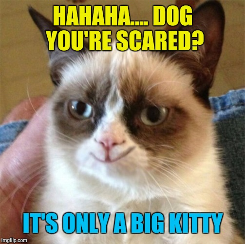 HAHAHA.... DOG YOU'RE SCARED? IT'S ONLY A BIG KITTY | made w/ Imgflip meme maker