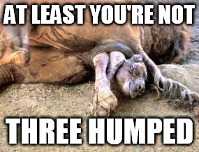 AT LEAST YOU'RE NOT THREE HUMPED | made w/ Imgflip meme maker