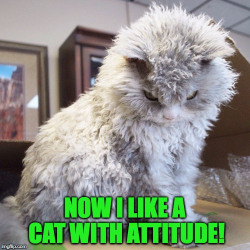 NOW I LIKE A CAT WITH ATTITUDE! | made w/ Imgflip meme maker